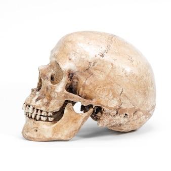 Einzelner menschlicher schädel lokalisiert auf weißem hintergrund
