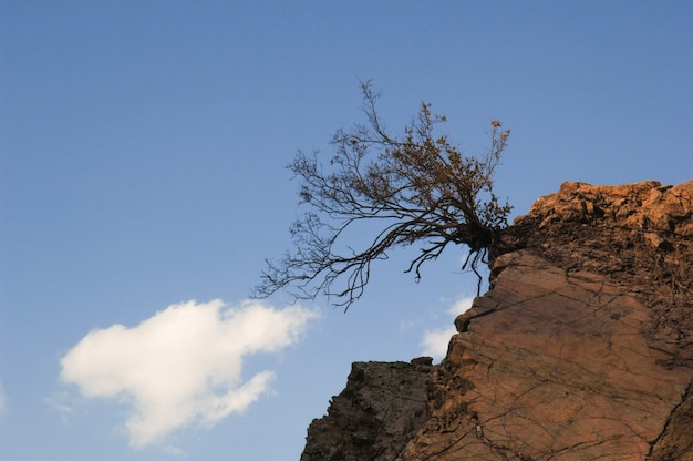 Einzelner trockener baum auf einem felsen gegen den himmel und die wolken
