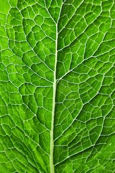 Einzelnes frisches grünes minzblatt