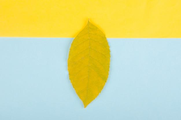 Einzelnes herbstblatt auf einem hintergrund des gelben und blauen papiers, minimales konzept