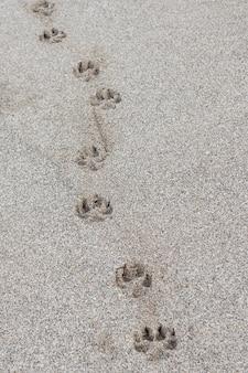 Einzelnes hundetatzendruck im sand