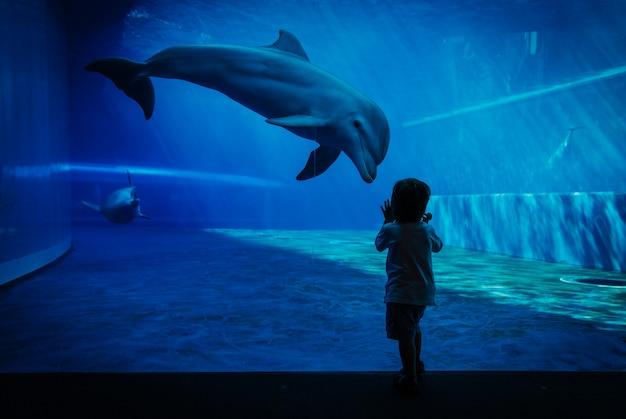 Einzigartiger kommunikationsmoment zwischen delphin und kleinem kind