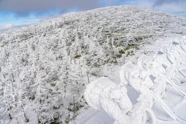 Eisbäume oder schneemonster bedeckt auf dem gefrorenen schneeberg unter bewölktem blauem himmel am berg zao