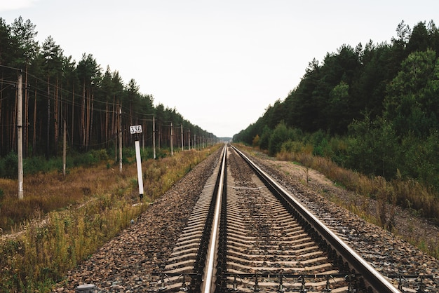Eisenbahn, die in perspektive über wald reist.