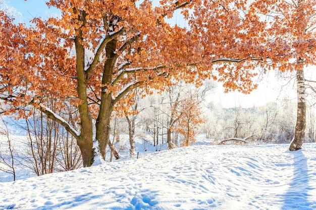 Eisige bäume im schneebedeckten wald. kaltes wetter am sonnigen morgen