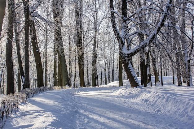 Eisige landschaft des morgenwinters im park. winterlandschaft starker frost, verschneite bäume