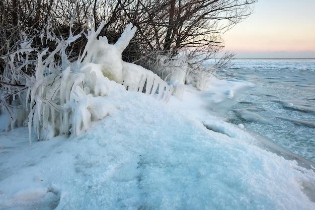 Eiszapfen und eisige gefrorene äste des baumes an der küste. schöne winterszene.