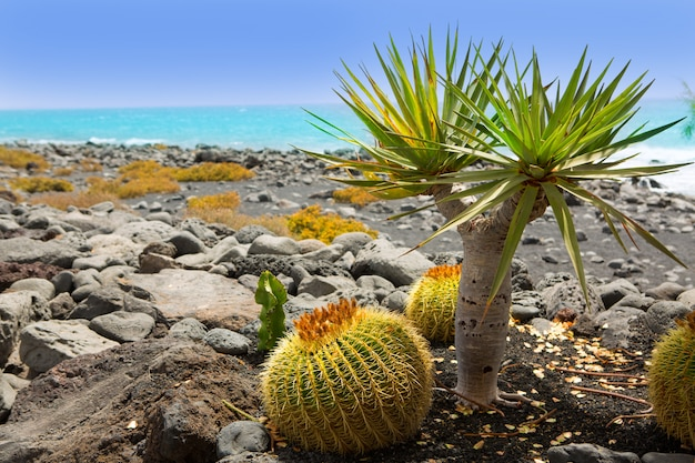 El golfo in lanzarote-kaktus am atlantischen ufer