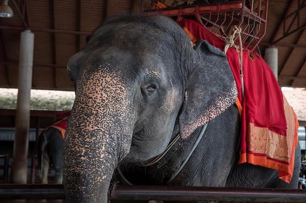 Elaphant für touristen reiten, ayutthaya