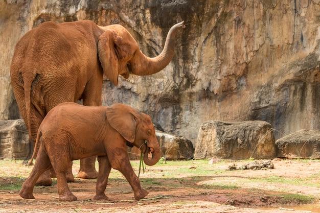 Elefant afrika tier in der natur.