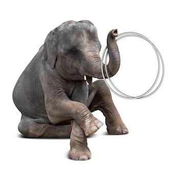 Elefant, der hulahoop spielt