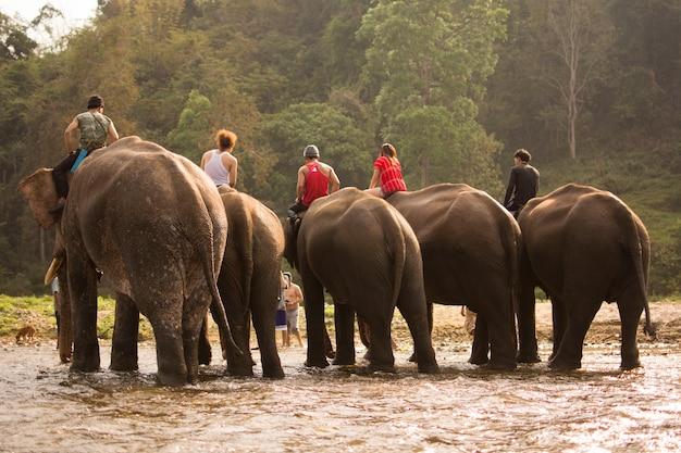 Elefant, der im fluss nach dem abschluss von trainingselefanten badet.