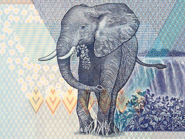 Elefant, ein porträt aus simbabwischem geld