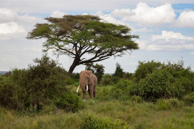 Elefant in der savanne unter dem baum