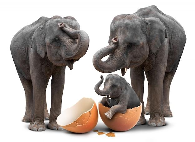 Elefant in eierschale und familie