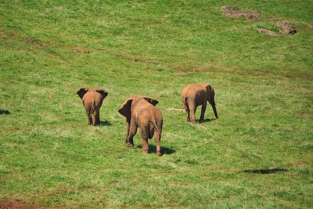 Elefant in freiheit in freiheit