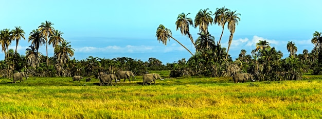 Elefant mit kilimandscharo