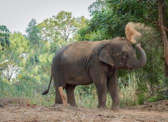 Elefant spielt mit Staub