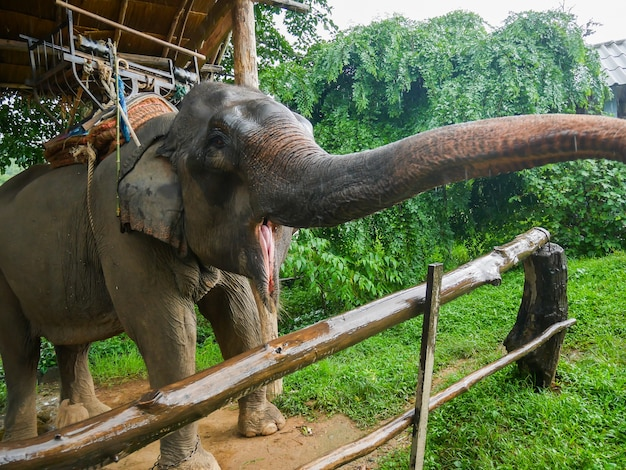 Elefanten sind im zoo