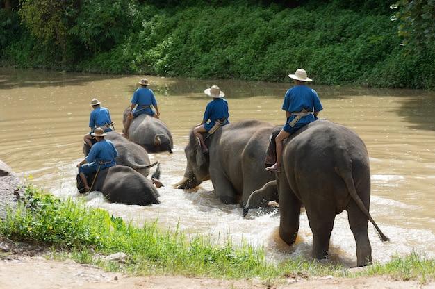 Elefanten-trekking