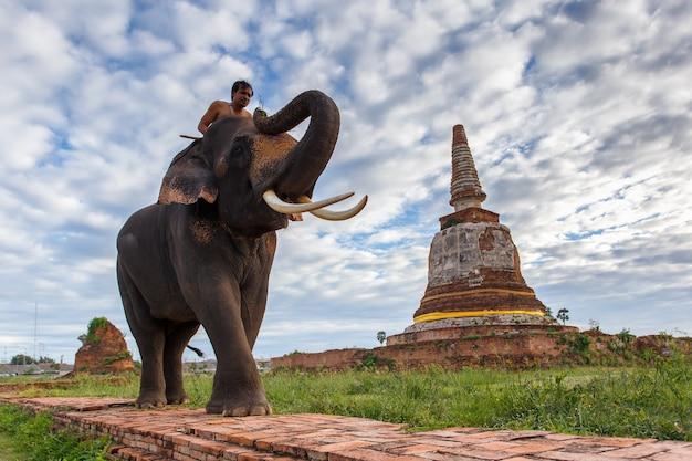 Elefanten und altes stupa in ayutthaya-provinz in thailand
