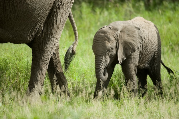 Elefantenbaby und seine mutter
