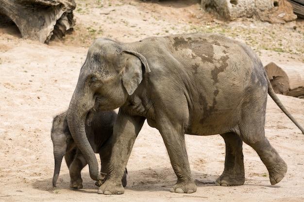 Elefantenmutter mit elefantenbaby