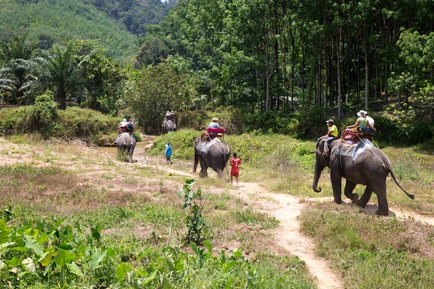 Elefantentrekking bei kao-sok, thailand