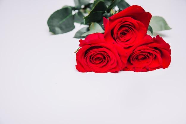 Eleganter hintergrund mit rosen