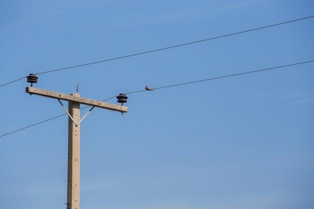 Elektromast und tauben stehen auf den drähten mit blauem himmelshintergrund