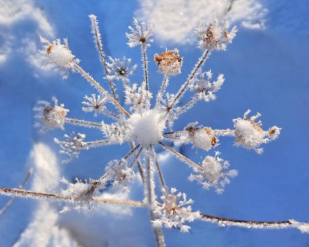 Empfindliche vegetation bedeckt durch frost unter blauem himmel