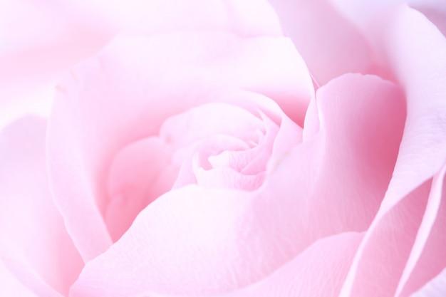 Empfindlicher unscharfer rosafarbener hintergrund