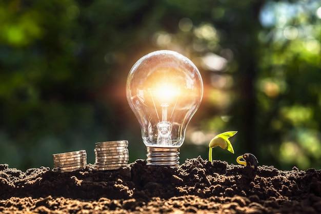 Energiekonzept. ökostrom. glühbirne mit geld und jungpflanzen auf dem boden