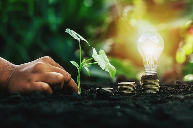 Energiesparende glühbirne und baum wachsen auf stapeln von münzen auf naturhintergrund. spar-, buchhaltungs- und finanzkonzept