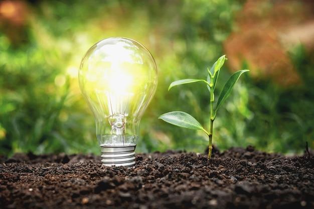 Energiesparlampen und bäume pflanzen auf dem erdboden elektrisches energiesparkonzept