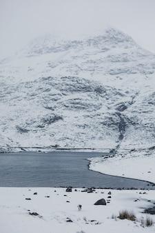 Englischer setter-hund, der auf einem verschneiten park spazieren geht
