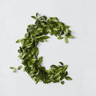 Englisches alphabet-konzept. alphabet isoliert. abc-buchstaben aus grünen blättern. buchstabe c mit grünen blättern dargestellt. symbol c auf weiß.