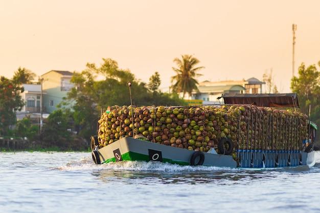 Enorme menge kokosnüsse auf frachtschiff an sich hin- und herbewegendem markt cai rangs, morgengroßhandelsfrucht und gutem markt auf can tho river, der mekong-delta-region, süd-vietnam, tourismusbestimmungsort. nahansicht.