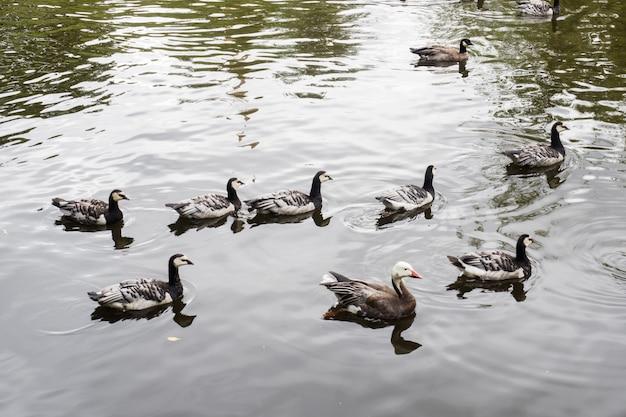 Enten im zoo an einem sonnigen sommertag