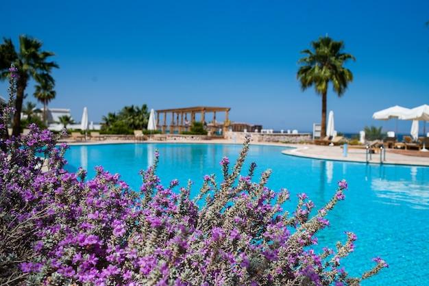 Entspannungsbereich in der nähe des pools im tropischen resort