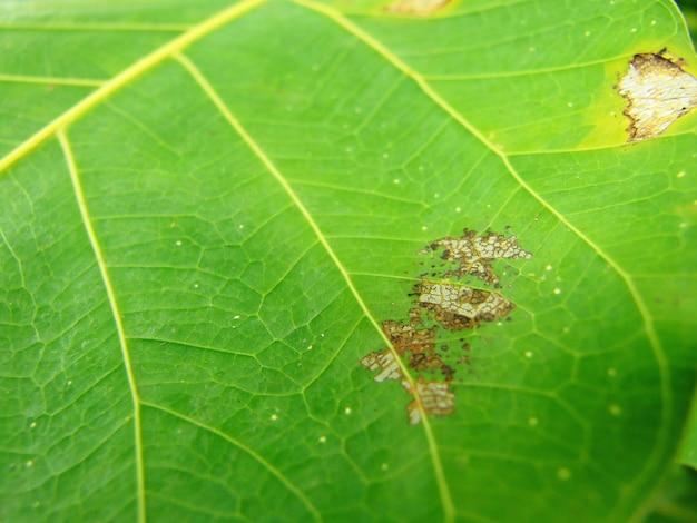 Entsteintes blatt in natürlichem ambiente