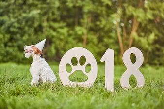 Entzückender glücklicher Foxterrierhund am neuen Jahr greetin des Parks 2018