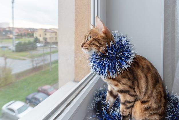 Entzückende bengalkatze im weihnachtslametta schaut aus dem fenster