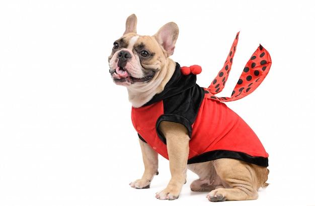 Entzückende französische bulldogge, die ein niedliches und lustiges marienkäferkostüm isoliert trägt