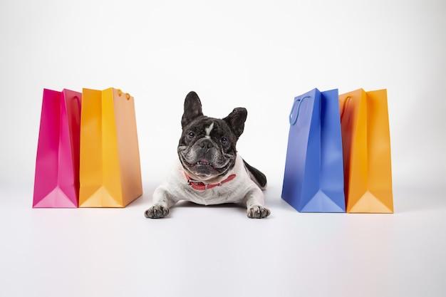 Entzückende französische bulldogge mit bunten einkaufstaschen lokalisiert auf weißem hintergrund