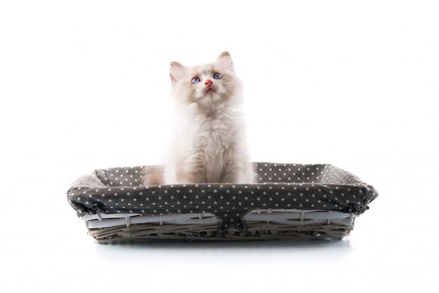 Entzückende katze auf getrenntem weißem hintergrund