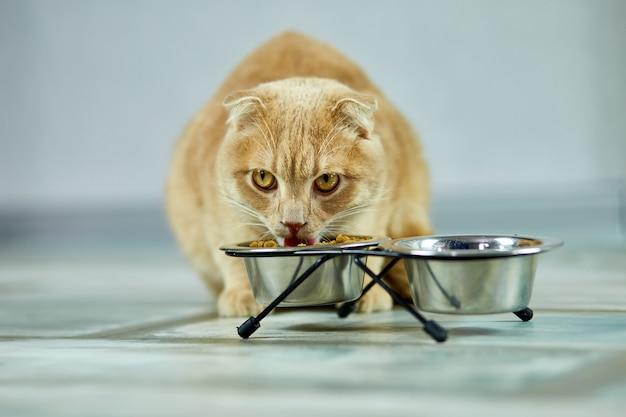 Entzückende katze, die trockenes knusperfutter in der metallschale nahe drinnen zu hause isst Premium Fotos