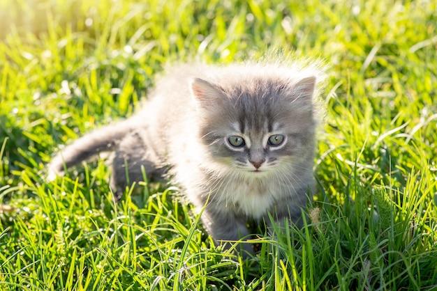 Entzückende kleine katze auf frischem hellem gras gegen die untergehende sonne