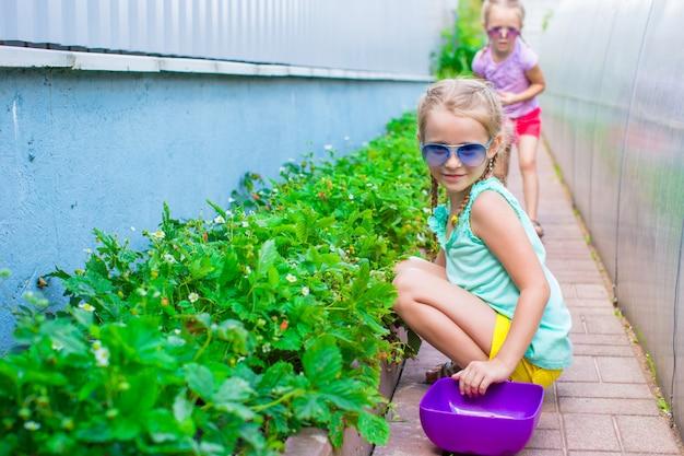 Entzückende kleine mädchen, die erntegurken und -tomaten im gewächshaus sammeln