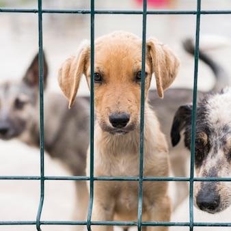 Entzückende rettungshunde am adoptionsschutz hinter zaun